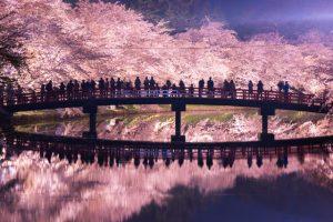 日本の桜 弘前公園